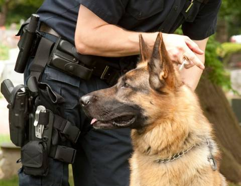 Κεφαλονιά: Ο σκύλος εντόπισε τα ναρκωτικά