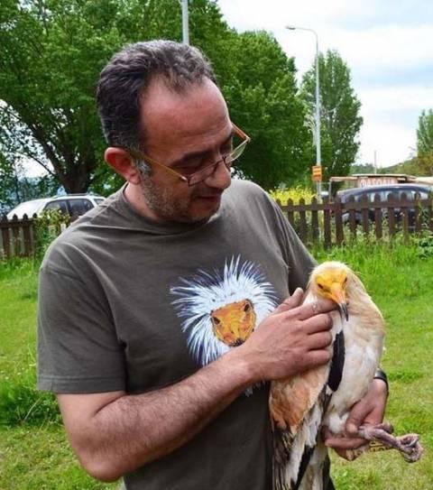 Ασπροπάρης: Ένα σπάνιο πτηνό φιλοξενείται στην Καστοριά