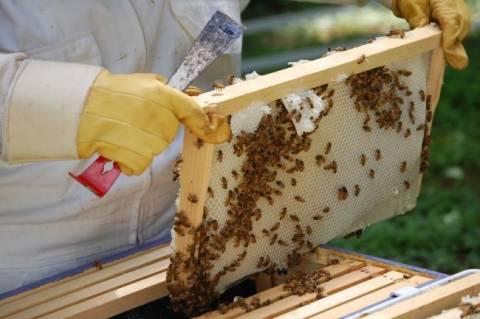 Έβρος: Σήμερα η συνάντηση μελών του Μελισσοκομικού συλλόγου