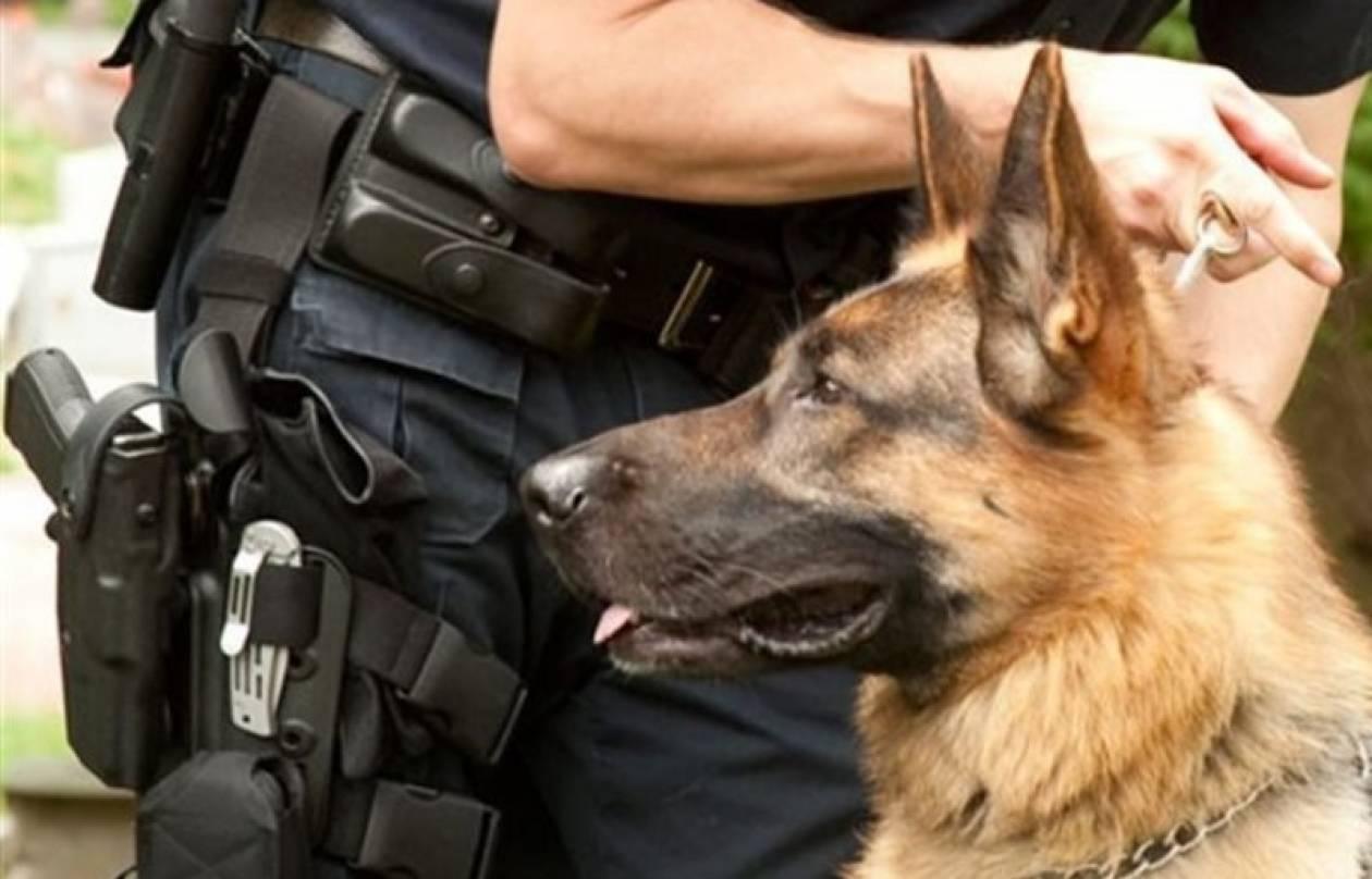 Ο αστυνομικός σκύλος έβγαλε ... λαβράκι !