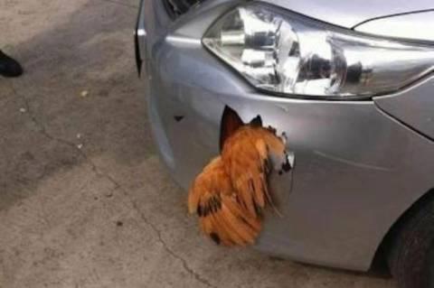 Χτύπησε κότα με 120 χλμ και δε φαντάζεστε τι έγινε! (photos)