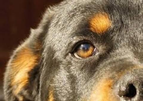 Αν είναι δυνατόν: Ανοίγουν οίκοι ανοχής για... κτηνοβάτες στη Γερμανία!