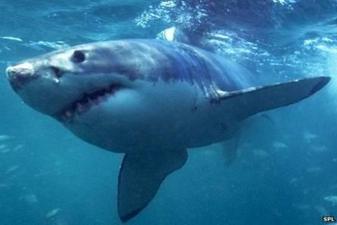 Αυστραλία: Σε εφαρμογή πρόγραμμα θανάτωσης καρχαριών! (video)
