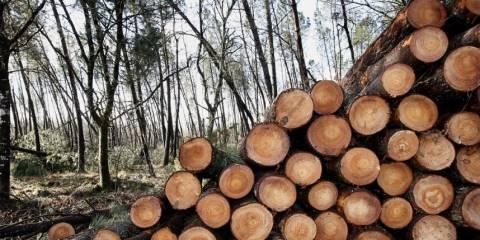 Απήγαγαν 11χρονη και την βίασαν στο δάσος