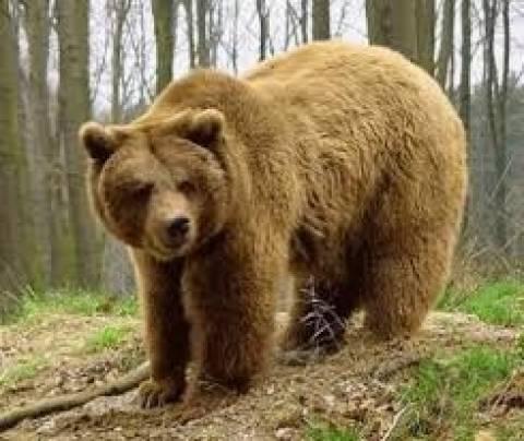 Αρκούδα πήγε σε σπίτι για να φάει αλλά την κυνήγησαν οι... (βίντεο)