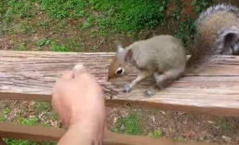 Ο παιχνιδιάρης σκίουρος με το όνομα «Ελεονώρα» (vid)