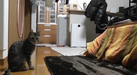 Cat κυρία στο διαδίκτυο datingδωρεάν dating Λαφαγιέτ Ιντιάνα