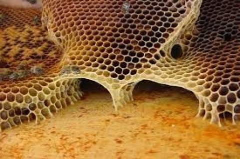 Επιχορήγηση ύψους 1,18 εκατ. € στη μελισσοκομία