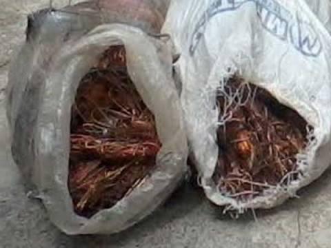 Δικογραφία σε βάρος 40χρονου για κλοπή καλωδίων χαλκού στο Ασπροκκλήσι Θεσπρωτίας