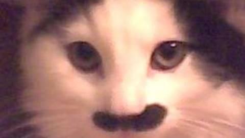 Έβγαλαν το μάτι γάτας γιατί έμοιαζε στον Χίτλερ! (pics)