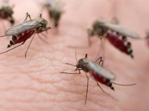 Αϊτή: Eξαπλώνεται ο ιός Chikungunya που προκαλείται από το τσίμπημα κουνουπιού