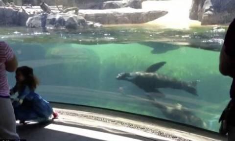 Δε θα πιστεύετε πώς αντιδρά ένα θαλάσσιο λιοντάρι όταν βλέπει ένα κοριτσάκι να πέφτει!