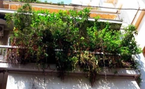 Θεσσαλονίκη: Πράσινα μπαλκόνια σήμερα στο Ελευθέριο-Κορδελιό
