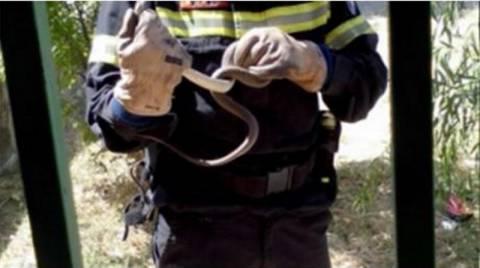 Φίδι μήκους 30 εκατοστών εισέβαλε σε ΚΑΠΗ