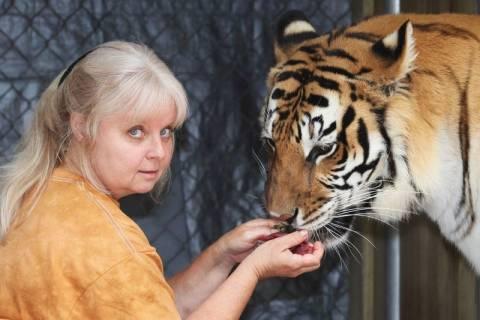 Φλόριντα: Δύο τίγρεις ζουν στην πίσω αυλή της! (video+photos)