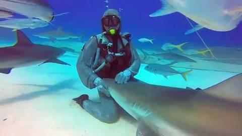 Κάνοντας ένα καρχαρία να φέρεται σαν… κατοικίδιο (Vid)