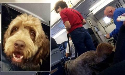 ΗΠΑ: Αναγκαστική προσγείωση αεροπλάνου λόγω… κόψιμο σκύλου! (video+photos)