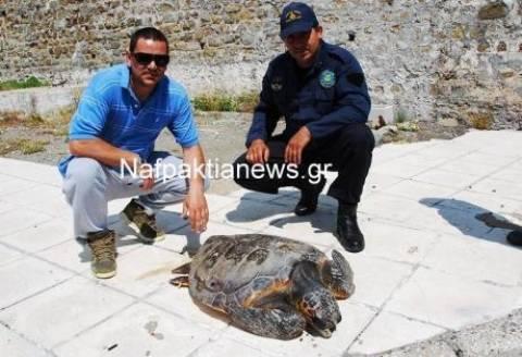 Αντίρριο: Βρέθηκε τραυματισμένη χελώνα καρέτα – καρέτα