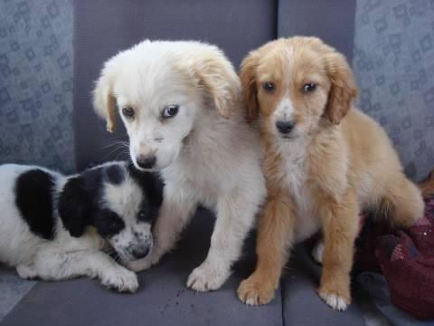 ΣΟΚ στον Κατσαμπά Κρήτης: Δολοφόνησαν με γυαλιά 8 σκυλάκια