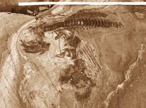 Χιλή: 46 απολιθώματα ιχθυόσαυρων ανακάλυψαν παλαιοντολόγοι