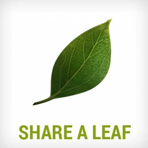 5/6 Παγκόσμια Ημέρα Περιβάλλοντος: Μοιράσου το πράσινο φύλλο του ΑΥΡΑ