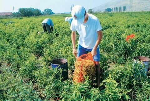 Ξεπέρασαν τις 8.000 οι αιτήσεις για το πρόγραμμα νέων αγροτών