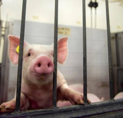 Αυτό το γουρούνι ποιος θα το... φάει; (pics)