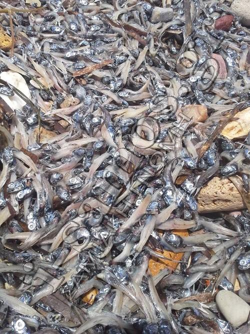 Χάος στη Σάμο: Ξεβράστηκαν χιλιάδες νεκρά ψάρια (pics)