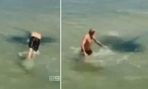 Βίντεο: Κολυμβητής προκαλεί σαλάχι-γίγας και δέχεται... επίθεση!