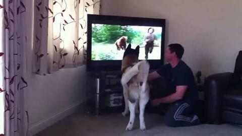 Σκύλος προσπαθεί να πηδήξει στην τηλεόραση για να σώσει αγόρι από αρκούδα (Video)
