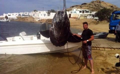 Photos: Big catch in Mykonos (Incredible fish)