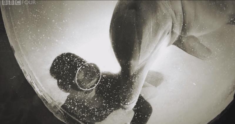 ΗΠA: Η γυναίκα που έκανε σεξ με δελφίνι λύνει τη σιωπή της! (video+photos)