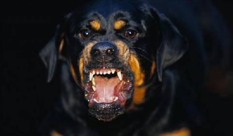 Σκύλος δάγκωσε τρεις αστυνομικούς στους Αμπελόκηπους