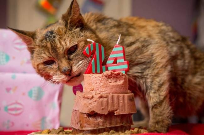 Πέθανε η γηραιότερη γάτα του κόσμου (pics)