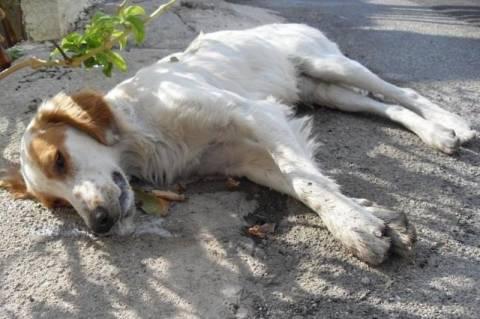Καλαμάτα: Ιταλός μαχαίρωσε σκύλο!