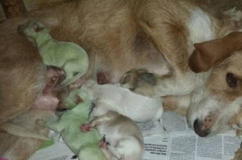 Γεννήθηκαν... πράσινα κουταβάκια! (pic)