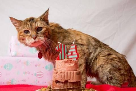 Старейшая в мире кошка умерла в 24 года