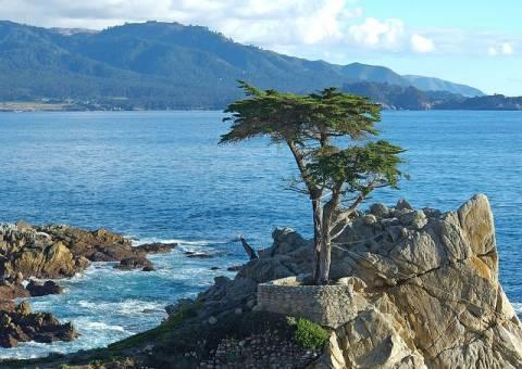 Εσείς γνωρίζετε ποια είναι τα πιο διάσημα δέντρα στον κόσμο; (pics)