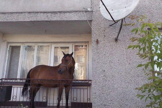 Πολωνία: Έβαλε το άλογο στη βεράντα για να μην το κλέψουν! (photo)