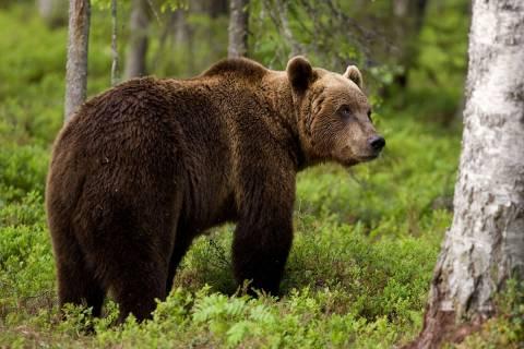 Αρκούδα εισέβαλε σε καφενείο του Ζαγορίου - Δείτε τι άφησε πίσω! (pics)