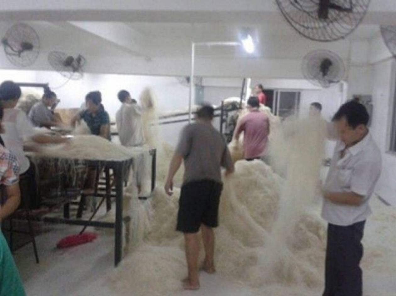 Παγκόσμιο - ΣΟΚ από τις φωτογραφίες εργοστασίου ζυμαρικών!