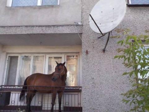 Έκρυψε το άλογο του στο... μπαλκόνι!