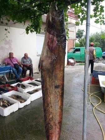 Κοζάνη: Δείτε το ψάρι που έβγαλαν από τη λίμνη – Ζυγίζει 145 κιλά (pics)