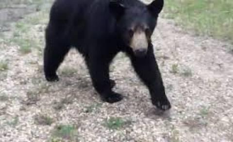 Βίντεο: Εκεί που έκαναν τζόκινγκ ήρθαν αντιμέτωποι με μια... αρκούδα!