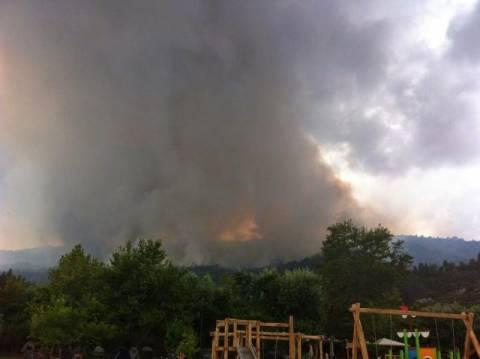 Σιθωνία: Έσβησε η φωτιά- Κάηκαν 550 στρέμματα