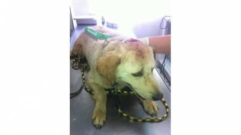 Κρήτη: Γλίτωσε από θαύμα το σκυλάκι-Το χτύπησε με λοστό για τις… κότες του