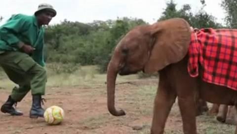 «Ντρίμπλα» με την προβοσκίδα από τον (Π)ελέφαντα (pics&vid)