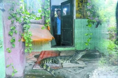 Κίνα: Έδιωξε τον κροκόδειλό του επειδή προσπάθησε να φάει την κόρη του!