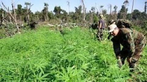 Ιδρύθηκε η πρώτη νόμιμη λέσχη μαριχουάνας