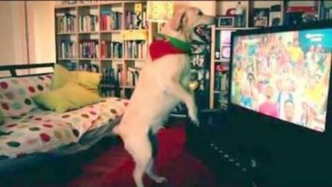 Μουντιάλ 2014: To απίθανο βίντεο και ο σκύλος που πανηγυρίζει τα γκολ…